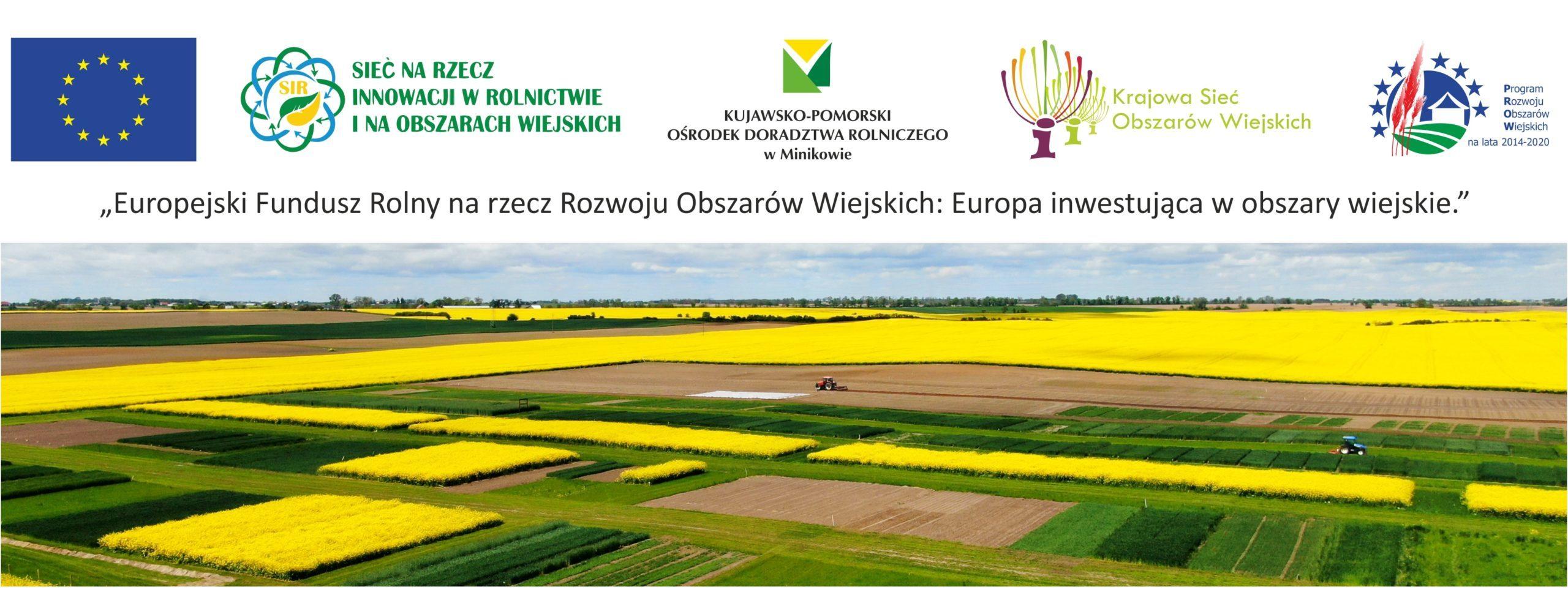 Sieć Innowacji w Rolnictwie i na Obszarach Wiejskich